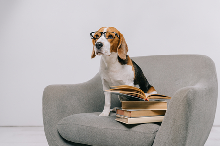 selective focus of cute dog in glasses sitting in armchair near old books Banque d'images - 116324386