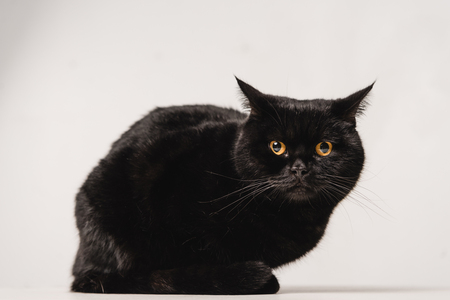 black cat sitting on table on grey background