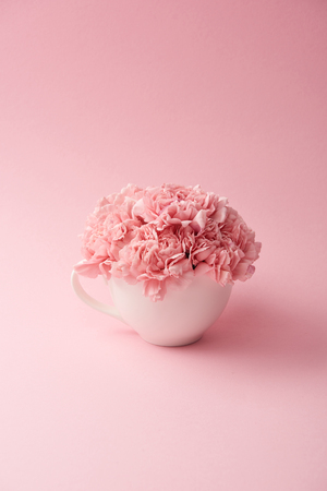 beautiful tender pink carnation flowers in white cup on pink background Фото со стока