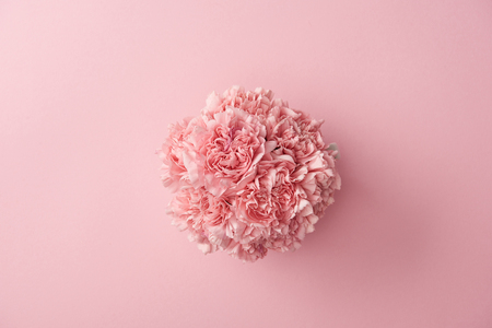 top view of beautiful tender pink carnation flowers isolated on pink background