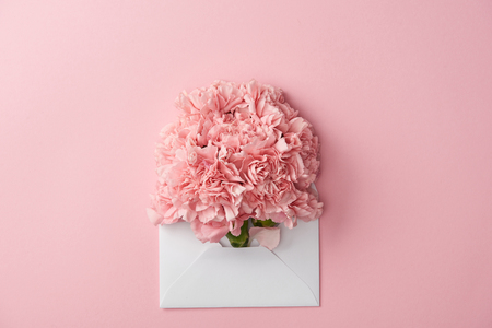 beautiful pink carnation flowers and white envelope isolated on pink