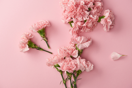 top view of beautiful pink carnation flowers isolated on pink background