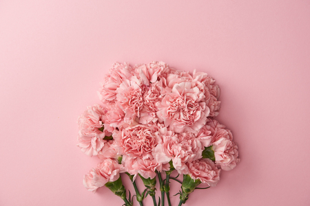 beautiful pink carnation flowers isolated on pink background 写真素材