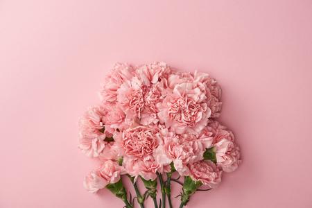 Hermosas flores de clavel rosa aisladas sobre fondo rosa Foto de archivo