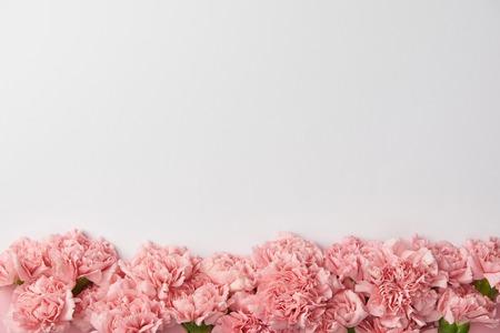 vista dall'alto di bellissimi fiori di garofano teneri isolati su sfondo grigio