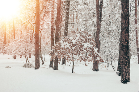scenic view of beautiful snowy winter forest with sunlight Stock fotó