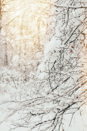 close up view of tree branches covered in snow with side lighting in forest
