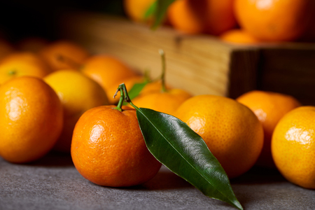 selective focus of organic clementine near tangerines with green leaves