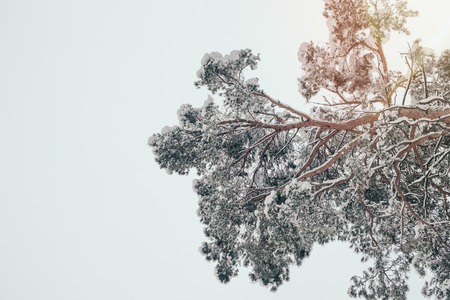 low angle view of tree covered with snow and clear sky