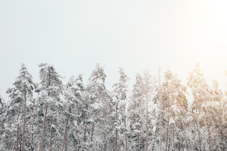scenic view of snowy winter forest with side lighting