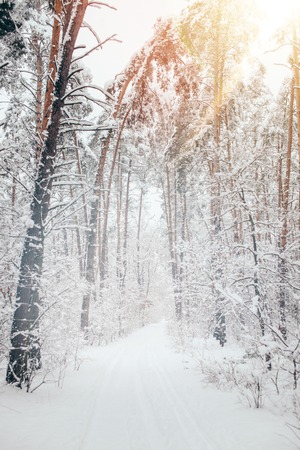 scenic view of beautiful snowy winter forest and sunlight