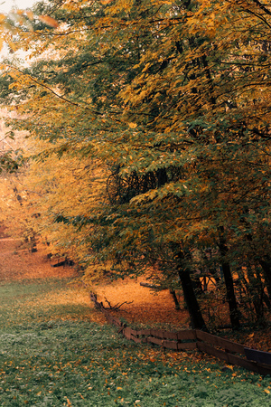 autumn leaves on tree twigs in peaceful forest  Stock Photo