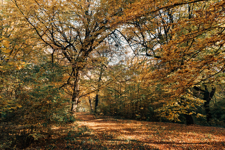 Sunlight on fallen leaves in autumn forest