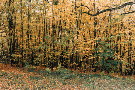 Autumn trees with yellow leaves on branches Stock Photo