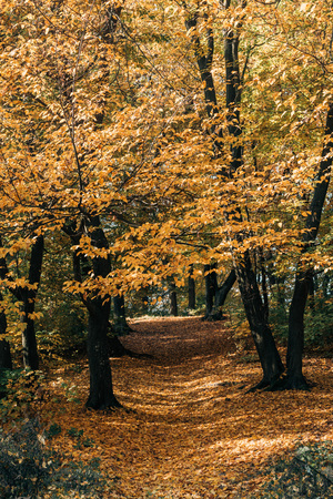Golden leaves on tree twigs in autumn forest