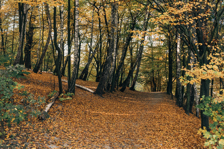 Fallen leaves on pathway in autumn forest