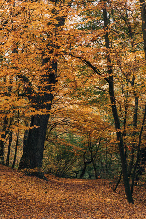 Autumn forest with yellow leaves on tree twigs Stock Photo