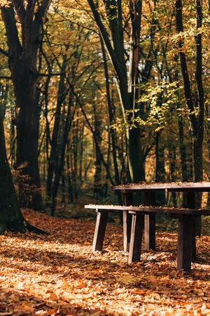 Sunshine on fallen leaves near wooden benches and table in forest Stock Photo