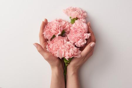 Vista parcial de la mujer sosteniendo hermosas flores de clavel rosa aisladas en gris Foto de archivo