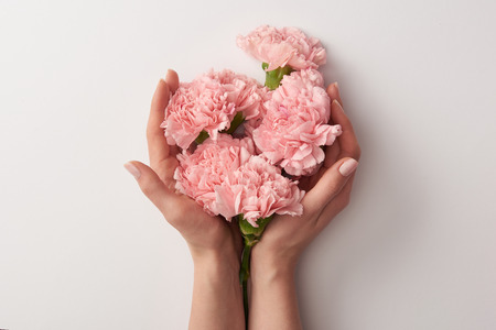 vista parziale della donna che tiene bellissimi fiori di garofano rosa isolati su gray Archivio Fotografico
