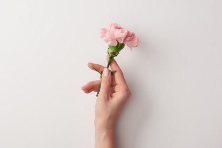 Ausgeschnittene Aufnahme einer Frau, die eine schöne rosa Blume isoliert auf Grau hält