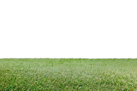 lawn with green grass on white, floral background