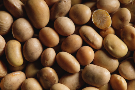 close up of soybean as textured background with copy space