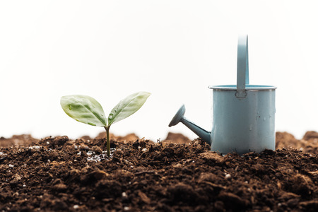 toy watering can near small green plant isolated on white