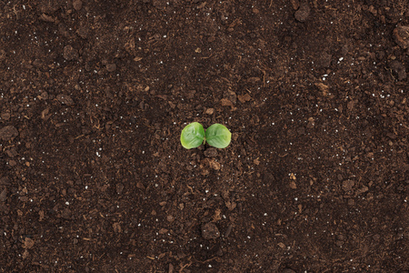 top view of ground with green plant with leaves, protecting nature concept 스톡 콘텐츠