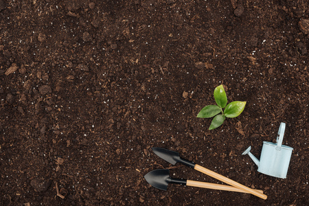 top view of green plant with leaves near toy watering can and shovels , protecting nature concept