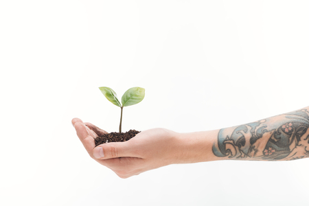 cropped view of man holding ground with green plant in hand isolated on white