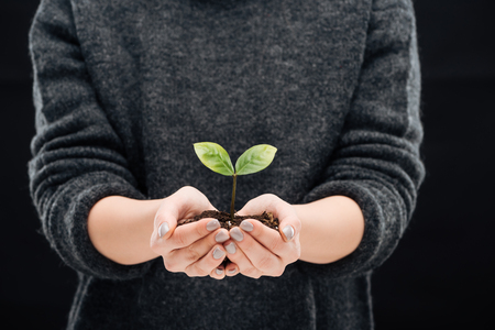 cropped view of woman holding ground with green leaves in hands isolated on black