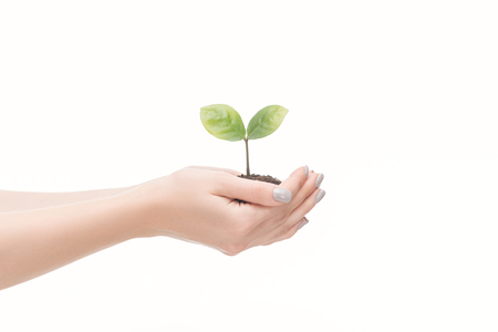 cropped view of woman saving ground with green plant isolated on white