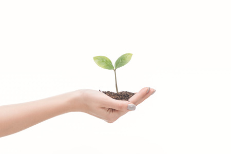 cropped view of female hand holding ground with green plant isolated on white 스톡 콘텐츠
