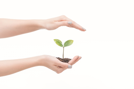 cropped view of female hands saving ground with green plant isolated on white