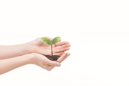 cropped view of female hands saving ground with green leaves isolated on white 스톡 콘텐츠