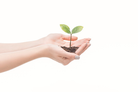 cropped view of female hands holding ground with green plant isolated on white