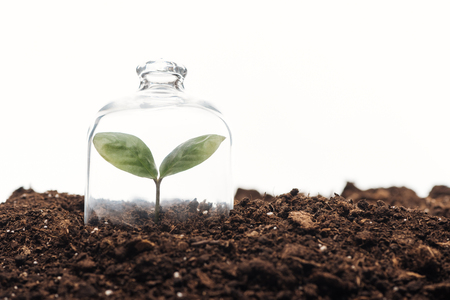 small green plant covered under bell jar isolated on white