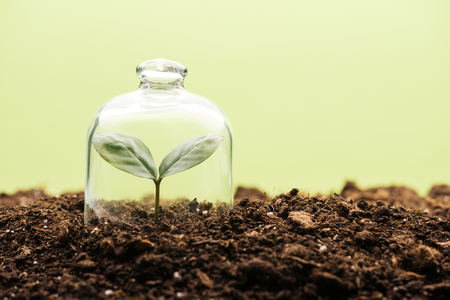 small green plant covered under bell jar isolated on green