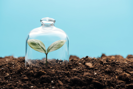 small green plant covered under bell jar isolated on blue