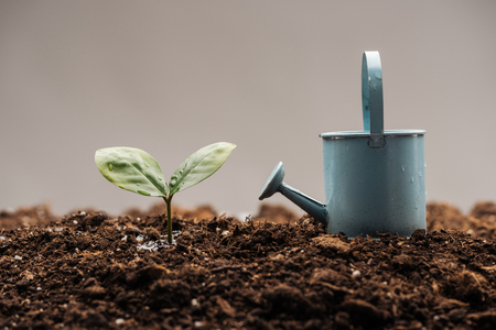 toy watering can standing near green plant isolated on grey