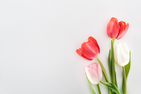 top view of red, pink and white tulip flowers isolated on grey Standard-Bild
