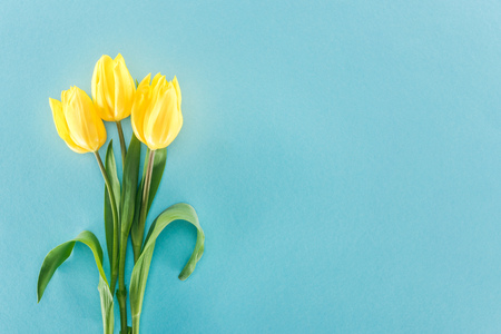 top view of bouquet with yellow spring tulips isolated on blue background Banque d'images