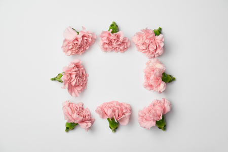 Flat lay of carnations flowers in square arranging on white background