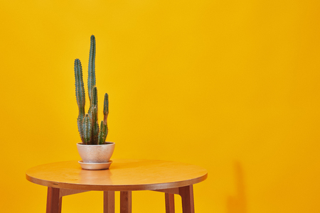 Cactus in flowerpot on little wooden table on yellow background
