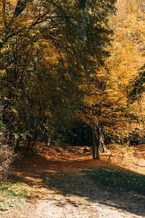 Autumn forest with leaves on tree twigs