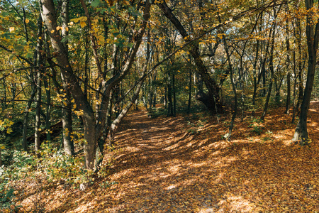Peaceful autumn forest with fallen leaves Stock Photo