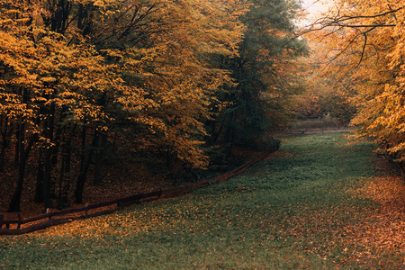 Pathway with fallen yellow leaves in autumn forest