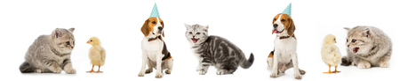 Collage of dog and cat, chickens and hen isolated on white