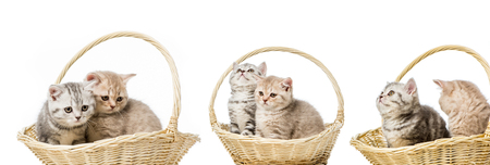 collage of cats in basket isolated on white Stock Photo